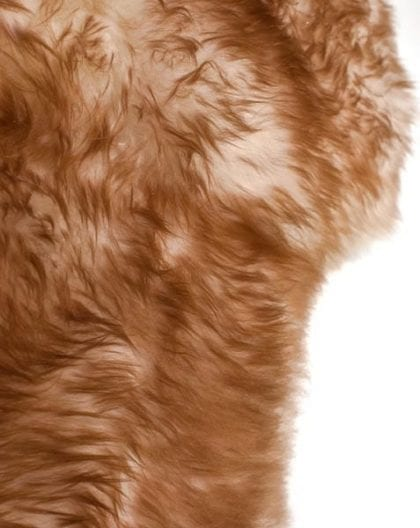 Premium Quality Large Genuine Sheepskin Rug in Natural with Brown Tips - Close