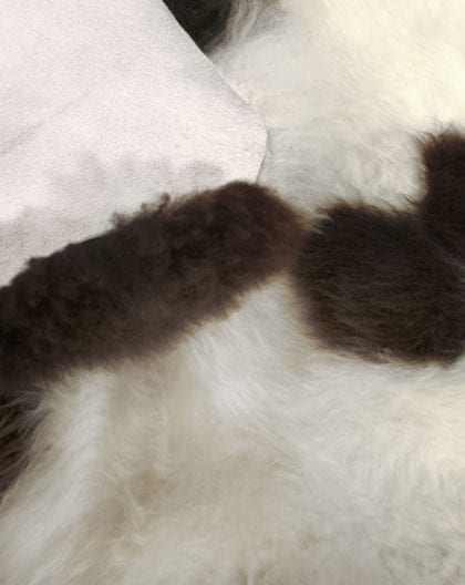 British Premium Quality Large Jacob Sheepskin Rug - Close